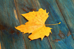 Yellow autumn leaf on blue rustic background. Season wallpaper Royalty Free Stock Photography
