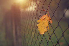 Yellow autumn leaf on fence Royalty Free Stock Image