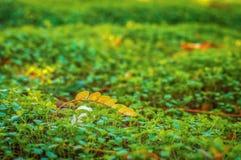Yellow autumn leaf on the green grass Stock Photos