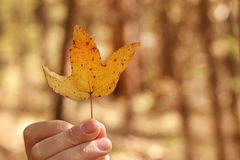 Yellow Autumn Leaf in Hand Stock Photography