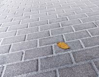 Yellow autumn leaf lying on a snowy pavement stock image