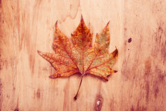 Yellow autumn leaf on natural wood Stock Photography