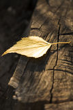 Yellow Autumn leaf on old dark tree trunk Royalty Free Stock Image