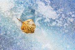 Free Yellow Autumn Leaf On The Ice Stock Photos - 59293033