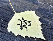Yellow autumn leaf pattern similar to Japanese kanji, signature autumn Stock Photography