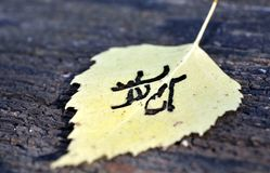 Yellow autumn leaf pattern similar to Japanese kanji, signature autumn. Yellow autumn leaf pattern similar to Japanese kanji on the old board, signature autumn Stock Images