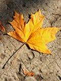 Yellow autumn leaf on the pavement Stock Photos