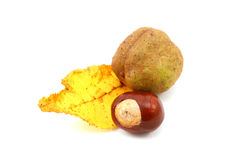 Yellow autumn leaf from a red horse chestnut with conkers Stock Photo