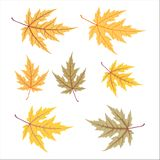 Yellow autumn leaf set Royalty Free Stock Photography
