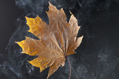 Yellow autumn leaf with smoke. Royalty Free Stock Photography