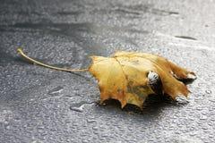 Yellow autumn leaf on spectacular rain drops stock photography