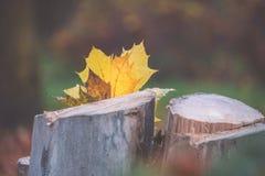 Yellow autumn leaf on a stub stock photography