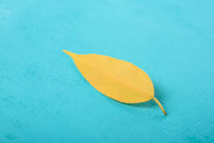Yellow Autumn Leaf On Turquoise Table Stock Images