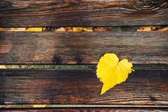 Yellow autumn leaf on the wet wooden bench. In the park after rain Stock Images