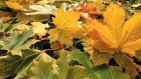 Yellow Autumn Leafs. The Autumn park. stock video footage