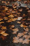 Yellow autumn leafs in the water on a flooded street by the curb stock photos