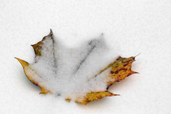 Yellow autumn leave of a maple covered with snow Stock Photography