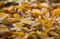 Yellow autumn leaves Stock Photos