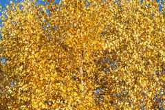 Yellow autumn leaves, abstract background Stock Images