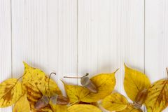 Yellow autumn leaves and acorn on a white wooden table stock photography