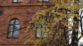 Yellow autumn leaves against a brick building stock video