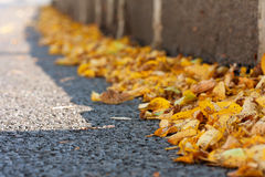 Yellow autumn leaves on asphalt Royalty Free Stock Image