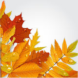 Yellow autumn leaves background 1 Stock Image