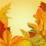 Yellow autumn leaves background Stock Photography