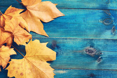 Yellow autumn leaves on blue rustic background. Season wallpaper Stock Photography