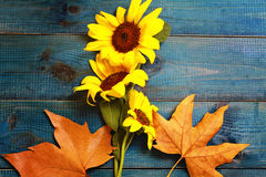 Yellow autumn leaves and bouquet of sunflower on blue rustic background. Season wallpaper Stock Images