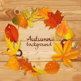 Yellow autumn leaves and chestnut  wreath on wooden back Royalty Free Stock Images