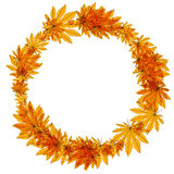 Yellow autumn leaves in a circle. Raster Royalty Free Stock Photography