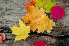 Yellow autumn leaves. Autumn yellow and colorful leaves in the composition laid on the table Stock Photography