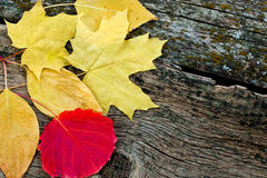 Yellow autumn leaves. Autumn yellow and colorful leaves in the composition laid on the table Stock Photo