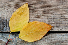 Yellow autumn leaves. Autumn yellow and colorful leaves in the composition laid on the table Royalty Free Stock Photo