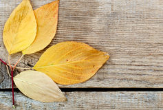 Yellow autumn leaves. Autumn yellow and colorful leaves in the composition laid on the table Royalty Free Stock Image