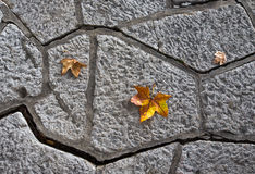 Yellow autumn leaves on a concrete tile path Stock Photography