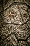 Yellow autumn leaves on a concrete tile path. Toned Royalty Free Stock Image