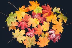 Yellow autumn leaves on the dark background royalty free stock photography