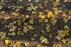 Yellow autumn leaves fallen on a gravel road Royalty Free Stock Image