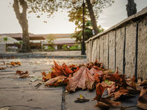 Yellow autumn leaves. Fallen yellow autumn leaves on the stone pavement Royalty Free Stock Image