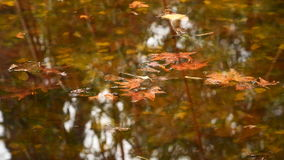 Yellow autumn leaves floating in the water. The water reflected the trees stock video