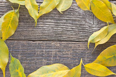 Yellow autumn leaves frame Stock Photography