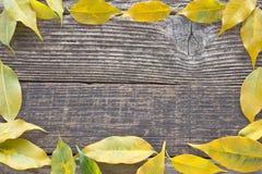 Yellow autumn leaves frame Stock Photo