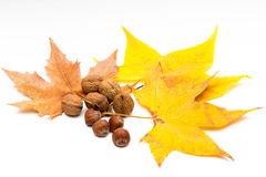 Yellow autumn leaves and fruits. View of some yellow autumn leaves and fruits on white background Royalty Free Stock Image