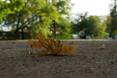 Yellow autumn leaves on the ground. In the forest Royalty Free Stock Photos