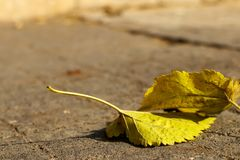 Yellow autumn leaves on the ground in sunlight. With a blurred background Royalty Free Stock Photos