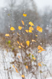 Yellow autumn leaves in heavy snowfall stock photography