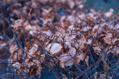 Yellow autumn leaves lie on a bush. stock photo