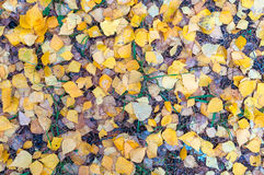 Yellow autumn leaves lie on the green grass royalty free stock photography
